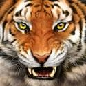 Samson High School - Boys Varsity Football