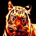 Loveland Tigers 2021 - 8th Grade LMS Tigers