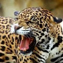 Rick Davis Youth Teams - North Harbour Jaguars