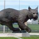 Kokomo High School - Boys Varsity Football