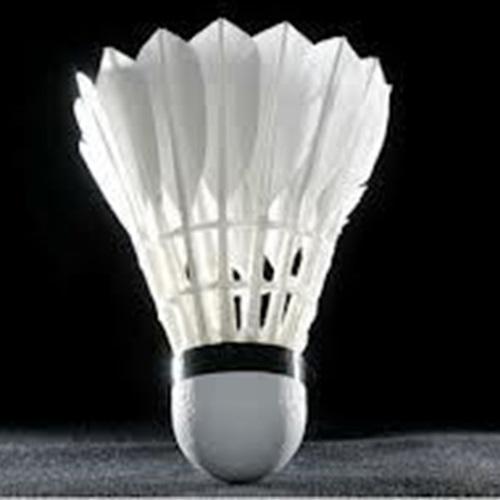 Bolingbrook High School - Badminton