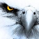Hedgesville High School - Hedgesville Varsity Football