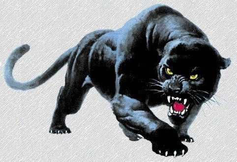 Panther Valley High School - Boys Varsity Basketball