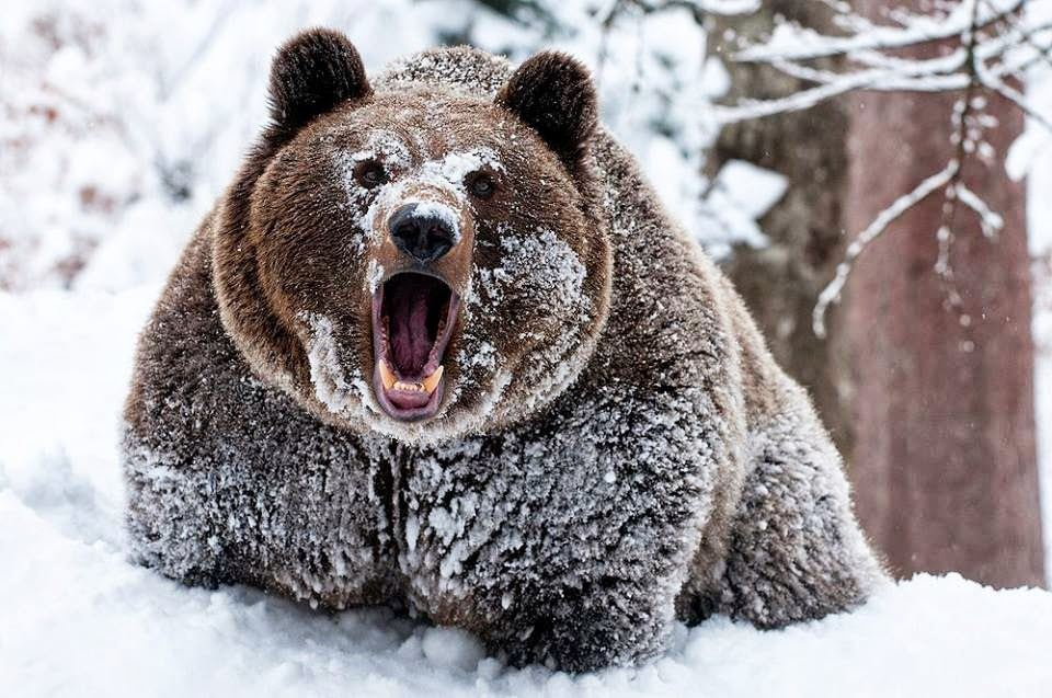 Sparta Bears - NJSYFL - Sparta Bears 8th Grade B Level