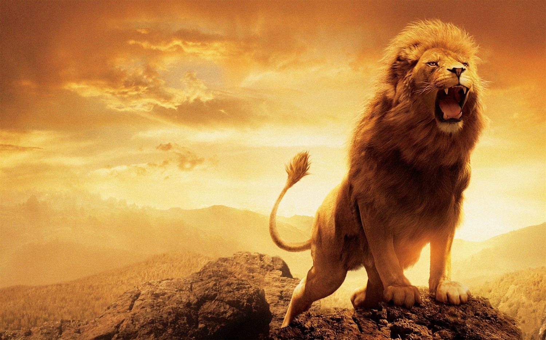 lion wallpaper images air - photo #22