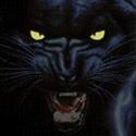 Centralia High School - Centralia Panthers Varsity