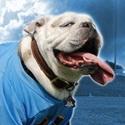 Burns High School - Bulldog Varsity Football