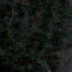 Sierra Fox