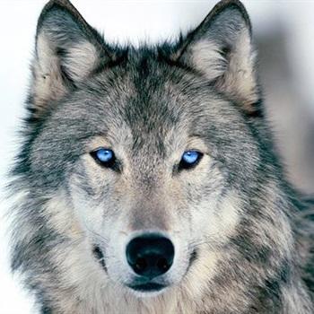 Garrett Wolf