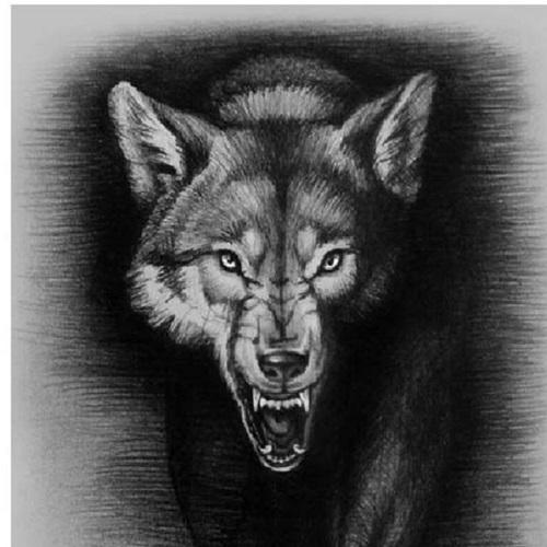 alpha wolves escondido pop warner palomar pw escondido