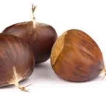 Major Chestnut