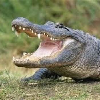 Northwood High School  - Gators