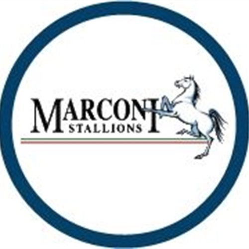 Marconi Stallions FC - Marconi Stallions FC - NPL2