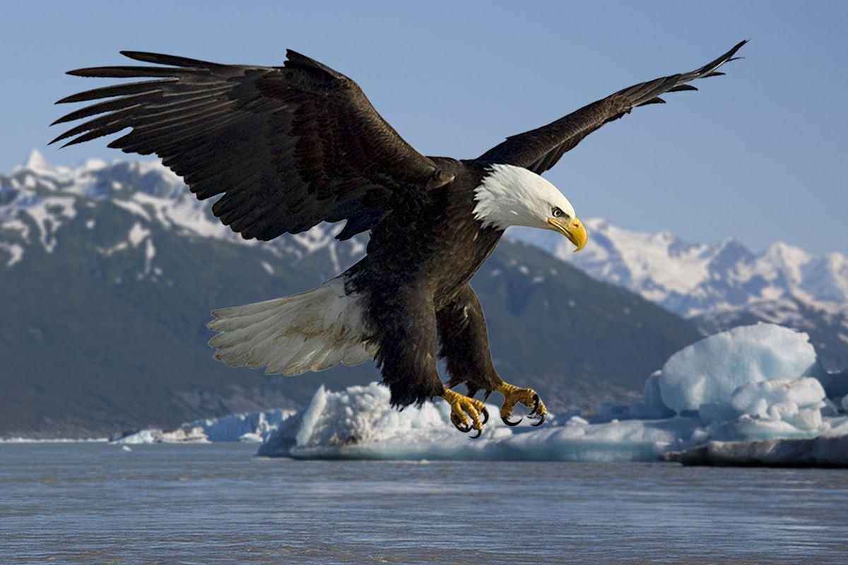James River -  Eagles