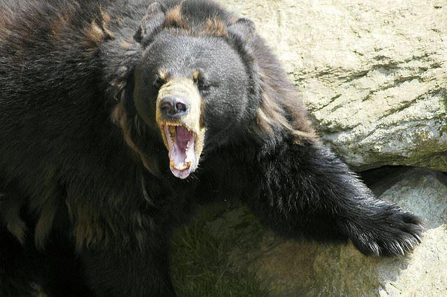 Boulder Bears - BL13A - Boulder Bears - Coach Mossman