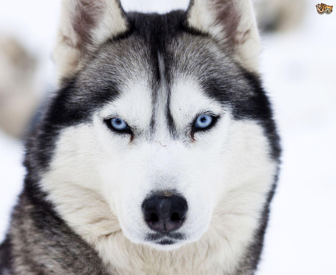 Edmond Huskies - Huskies