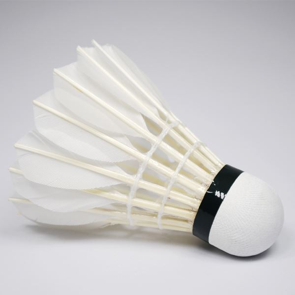 Downers Grove North - Badminton