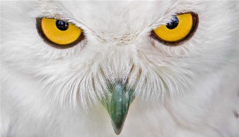 Lynbrook High School - Owls Football