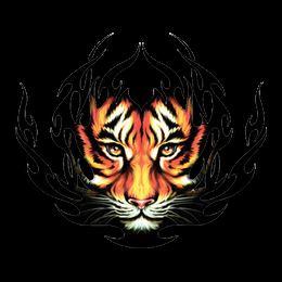 North Bend Central High School - NBC Tigers Dance Team
