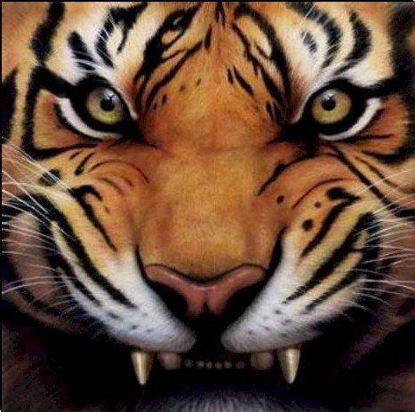 Moyers High School  - Moyers Tigers