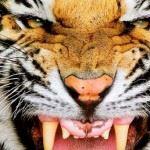 Jonesboro-Hodge High School - Jonesboro-Hodge Football