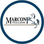 Marconi Stallions FC - Marconi Stallions FC - WNPL2
